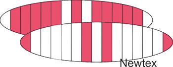 pink-weiss-kl